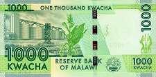 Малави: 1000 квачей 2012-13 г.